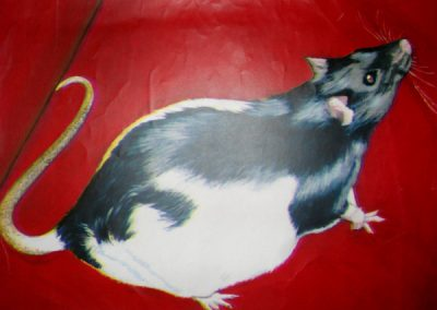 Heike the Rat