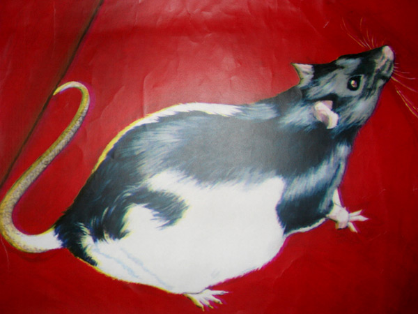 Heike the Rat